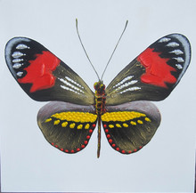 Original design cartoon butterfly canvas painting for wall decoration