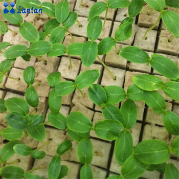 Vertical hydroponic system mineral Agricultural rock wool cubes supplier