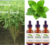 stevia liquid sweeteners+grape flavor