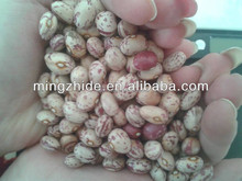 new crop light speckled kidney bean