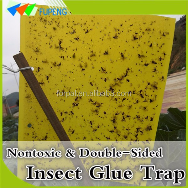 FUPENG Original Green Household Flying Insect Glue Traps Fly Trap