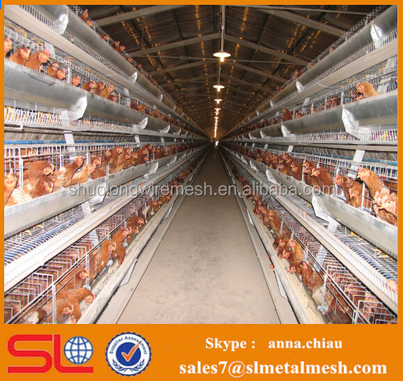 Cheap prefab poultry house / poultry broiler house / chicken house