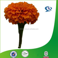 natural marigold extract lutein xanthophyll for chickens