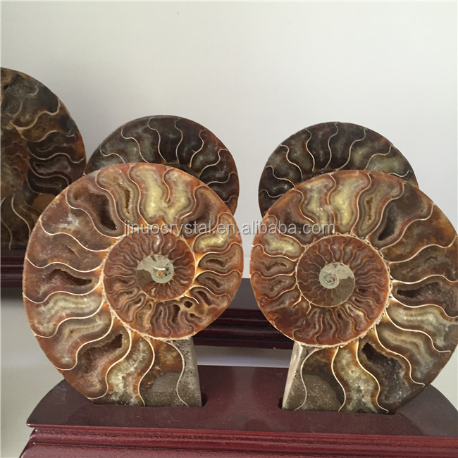 Natural Conch Polished Jade Pattern Ammonite Fossil for Sale