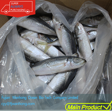Grade A Frozen Pacific Mackerel Fish land Frozen For Marketing phillipine