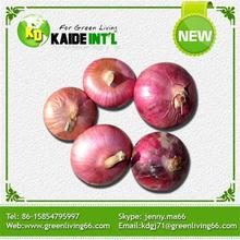 Factory Price Products Fresh Onions