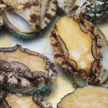 hot sale high quality abalone for sale