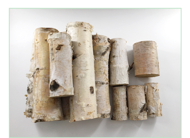 Coarse white birch, birch wood, logs, birch, wood segments, decorative birch trees, birch trees, windows, garden decoration