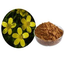 Hot Sell cat's claw extact powder Uncaria Tomentosa 10:1 cat's claw extract powder with Alkaloids