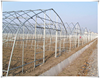 Galvanized Steel Pipe Frame Agriculture Single