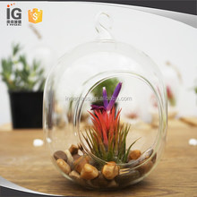 Glass Capsule Plant Orb/Terrarium for Sale