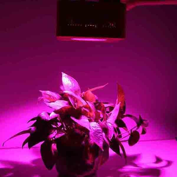 hydroponic cob grow light 200 watt epiled cob chip led. Black Bedroom Furniture Sets. Home Design Ideas
