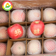The Luochuan Fuji apple crunchy red Apple fruit market best prices