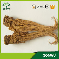 natural dahurian angelica root extract powder 10:1,5:1 Angelica Acutiloba Root Extract