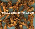 Dried Galangal
