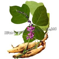Pueraria Mirifica Extract Powder