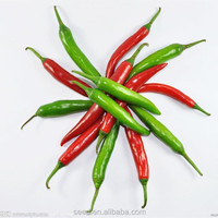 SXP No.14 hot pepper Chilli seeds for sale