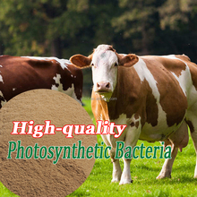 Feed, Animal Feed Solid Photosynthetic Bacteria