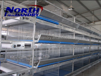 Factory automatic egg collection chicken farm in malaysia