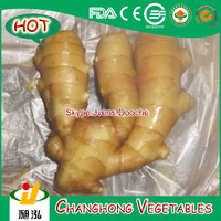 Fresh Ginger with 100g up and 22kg/mesh bag CNF Chittagong