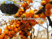 High Germination Big Fruit Type Hippophae Rhamnoides/Seabuckthorn Seed For Planting