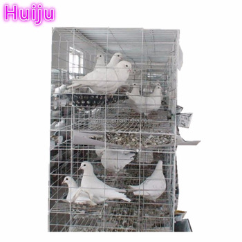 Poultry farm use racing pigeon cage/pigeon racing/pigeon house