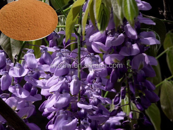Hot selling plant extract newest kudzu extract pueraria flavones