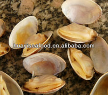 hard shell clam