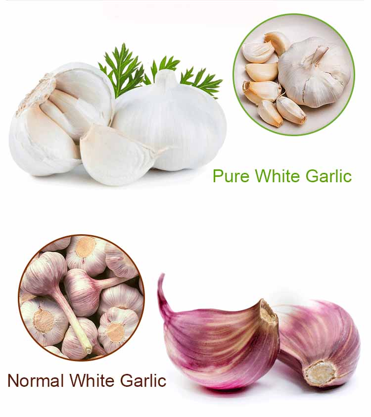 5.5cm China Fresh Red Garlic Price