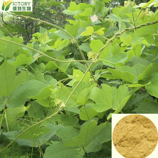 100%pure pueraria mirifica extract / pueraria mirifica powder for hot open breast