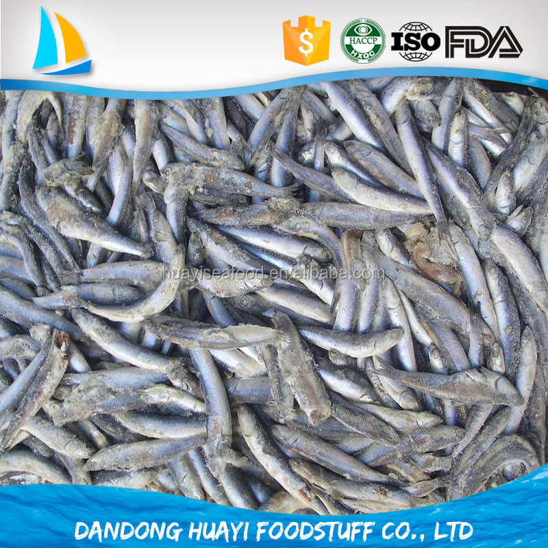 new arrive 12cm frozen anchovy for fish meal engraulis japonicus