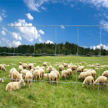 China manufacture hot dipped galvanized sheep fence
