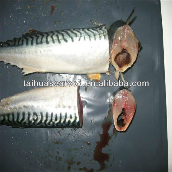 cooking and frozen seafood mackerel fish supplier