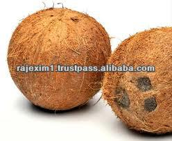 Fresh Coconut Price for UAE Market