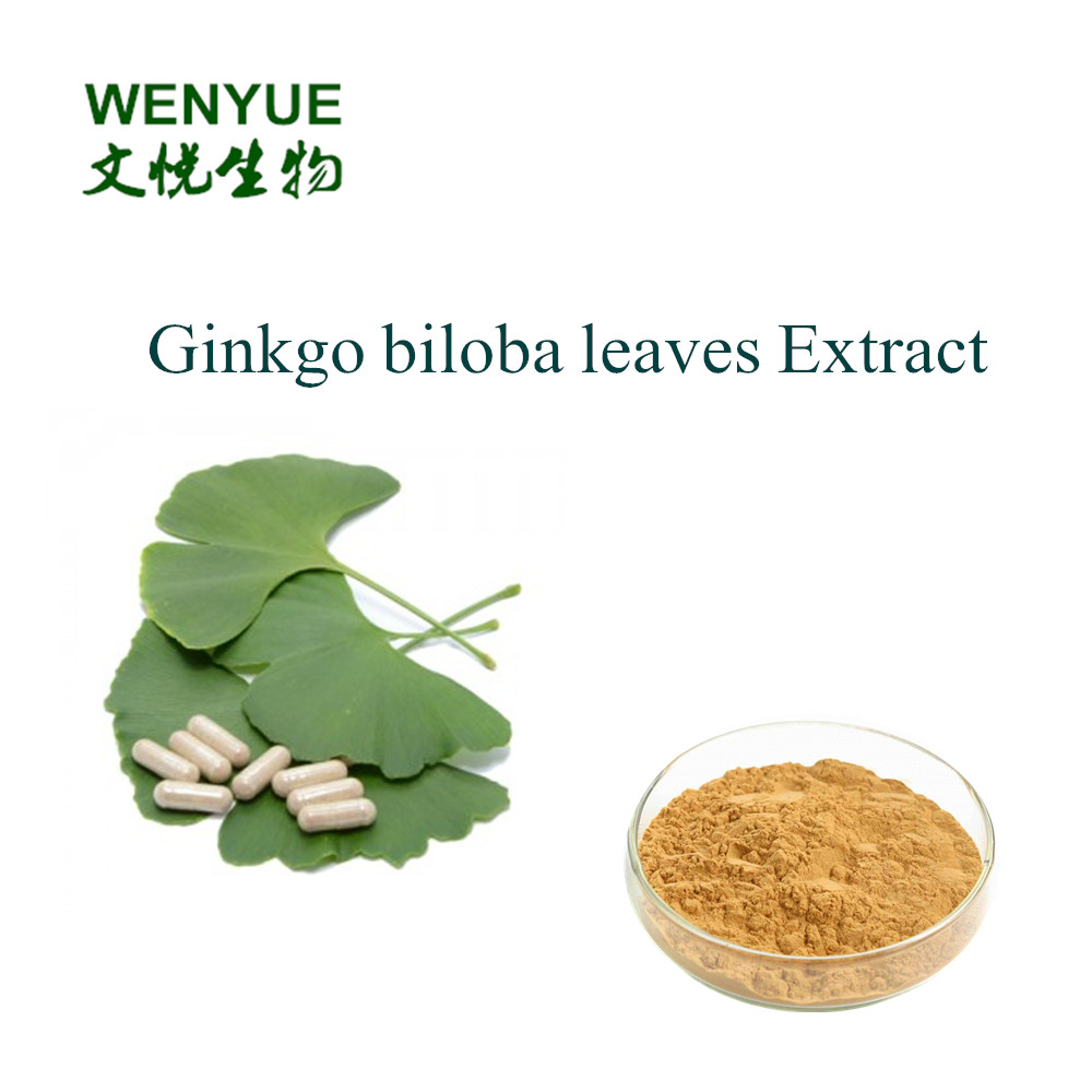 nutritional supplements Ginkgo biloba leaves Extract with Ginko flavones Terpenlactone