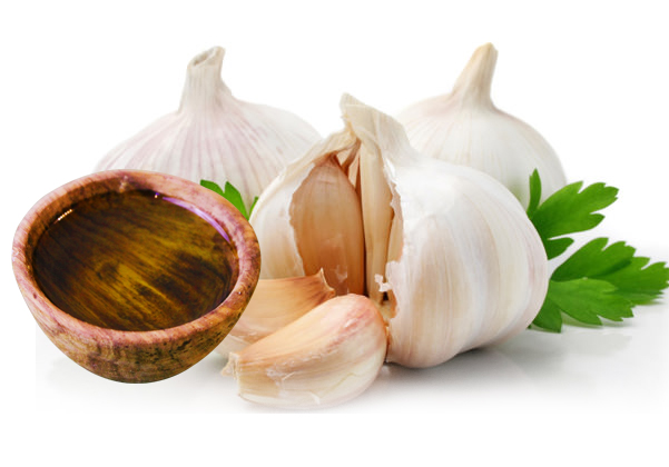 Factory Direct Sale High quality Organic Garlic Oil for Hair Care with Cheap Price