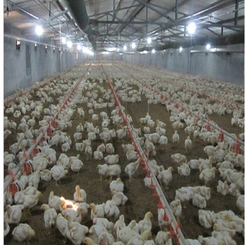 China prefab steel structure chicken farm building