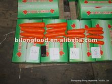 new farm fresh red carrot for wholesale