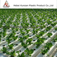 Tomato growing Lettuce growing vegetable growing hydroponic pipe
