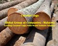 Coconut Logs / Lumber