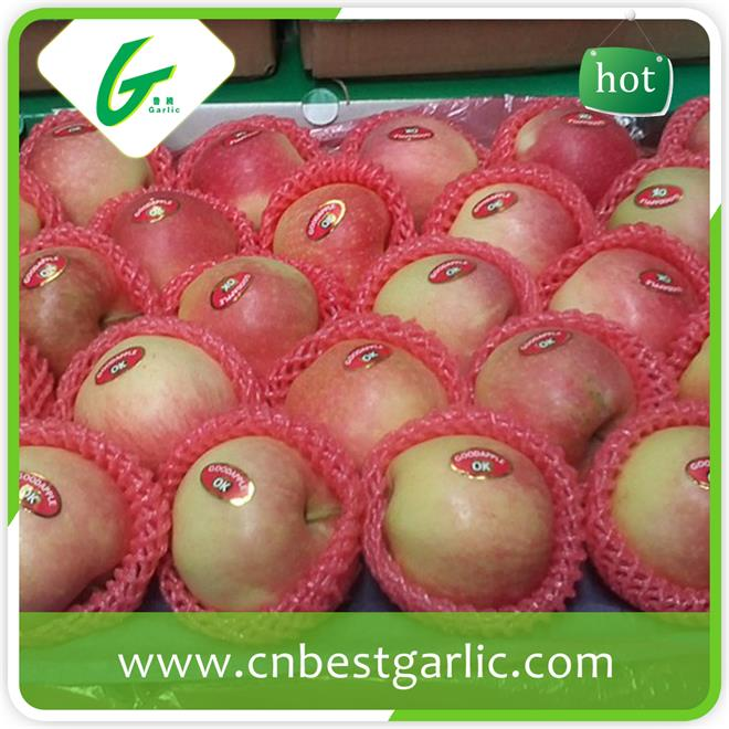 BRC certification high quality fresh sweet gala apple with top qualty