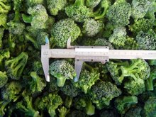 IQF vegetables BROCCOLI from china