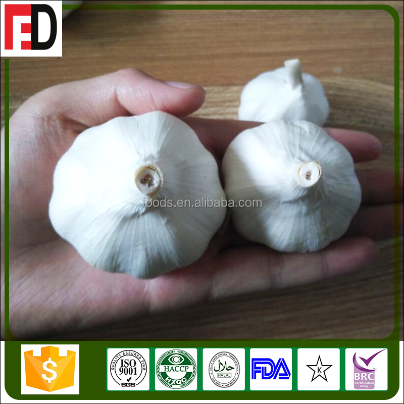 1 clove garlic price exporters china, good farmer garlic price 1 kg