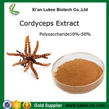 Natural king of cordyceps extract with great price