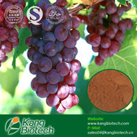 Manufacturer sell high quality Grape Seed Extract 95% 98%