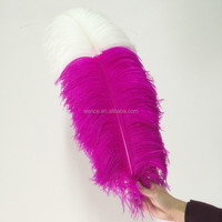 wholesale White Ostrich Feather,15-75cm colourfull ostrich plumes for decoration
