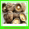 Export dried mushrooms in high quality