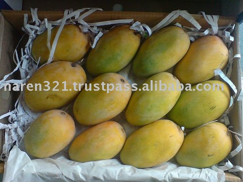 Fresh Alphonso and Kesar Mangos from India
