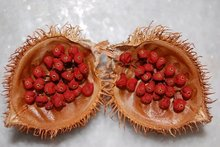 Achiote Spray Dried Extract