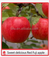 2016 Shaanxi fresh fruits hot sale red star apple